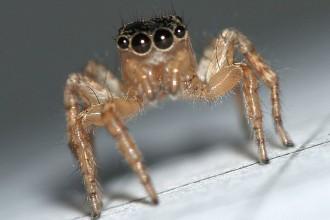 8 astuces naturelles pour lutter contre les araign es la for Astuces contre les fourmis dans la maison