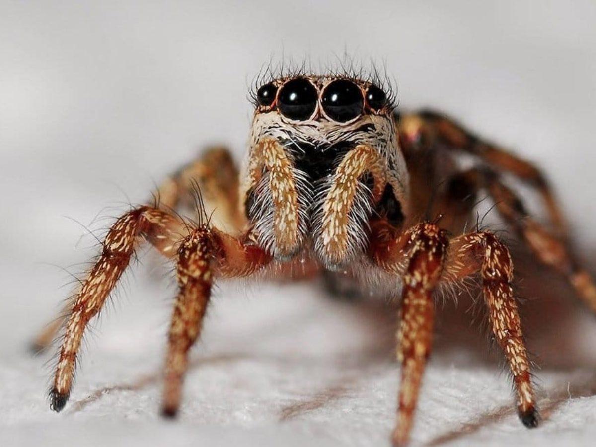 Huile Essentielle Efficace Contre Les Cafards 8 astuces naturelles pour lutter contre les araignées à la maison