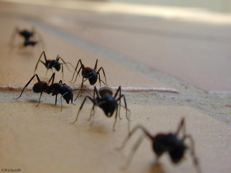 L 39 astuce naturelle pour lutter contre les fourmis la for Astuce contre les mouches dans la maison
