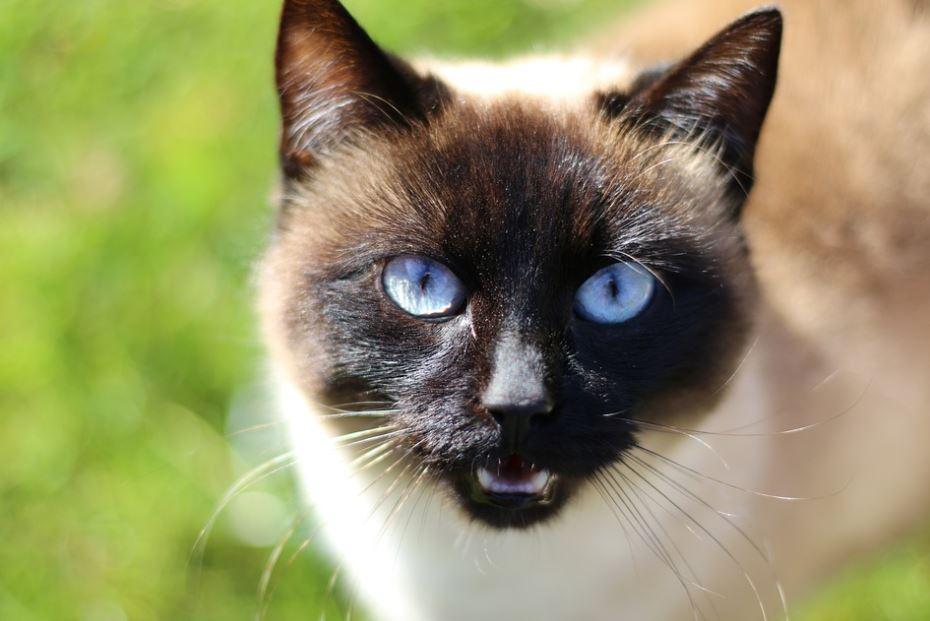 R pulsif pour chat le m lange naturel pour les loigner sans leur faire de mal - Repulsif chat jardin naturel ...