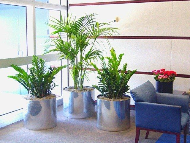 design-intérieur-moderne-plantes