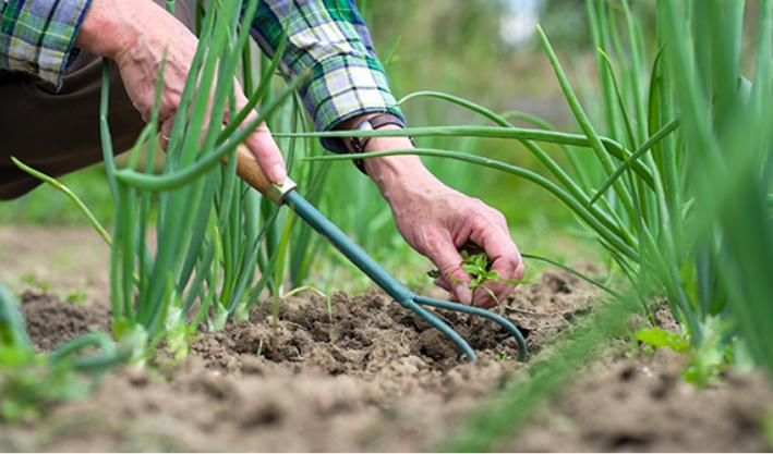 Comment conna tre le ph du sol de votre jardin astuces for Solde plante jardin