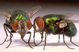 voici comment lutter contre les mouches avec des fleurs astuces de grand m re. Black Bedroom Furniture Sets. Home Design Ideas