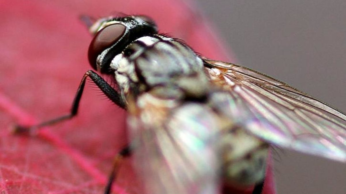 Remede De Grand Mere Contre Les Moucherons Dans La Maison 10 répulsifs à mouches que vous voudrez dans votre maison