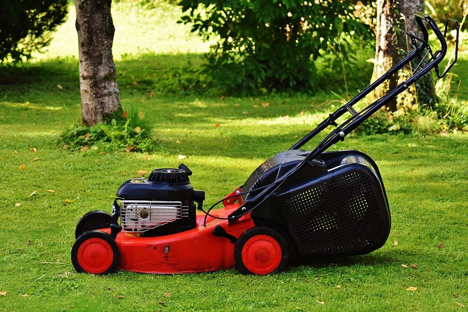 tondeuse tondre pelouse gazon