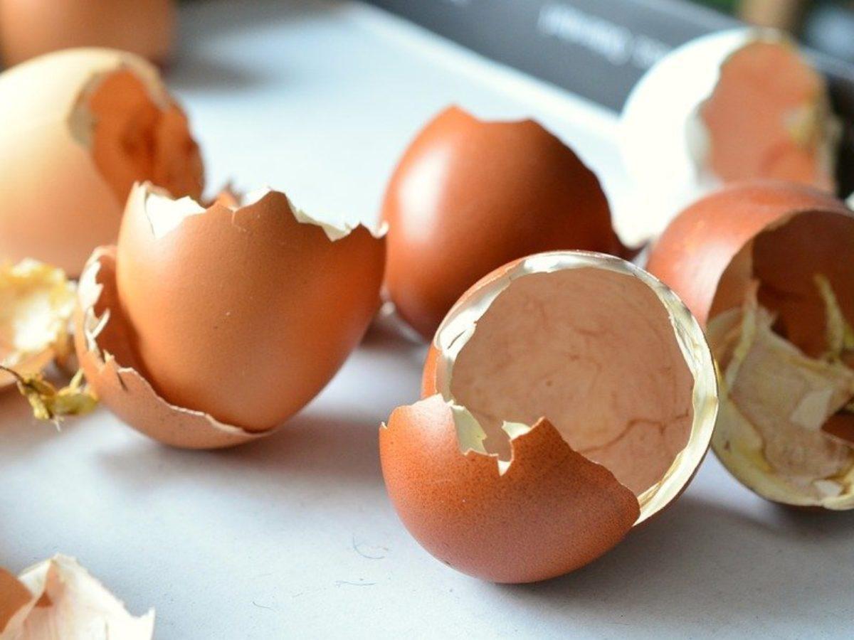 13 utilisations incroyables de la coquille d'œuf - Astuces de ...