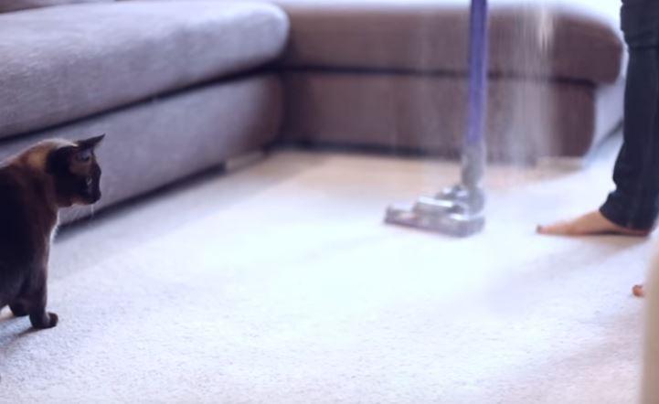 poils de chat tapis moquette
