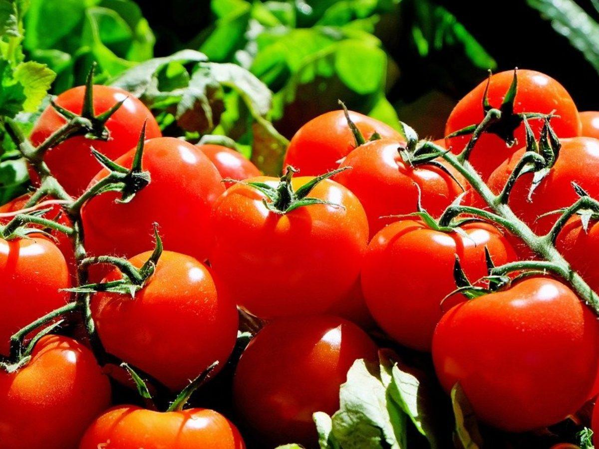 Comment conserver vos tomates pour qu'elles durent plus longtemps ?