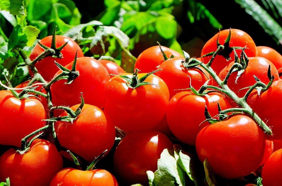 une astuce tonnante et m connue pour conserver les tomates en parfait tat. Black Bedroom Furniture Sets. Home Design Ideas