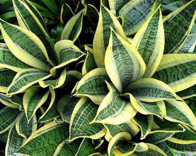 webplants
