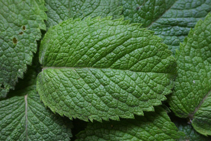 peppermint-1110_960_720