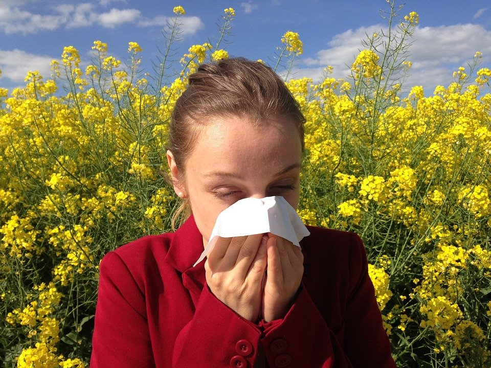 rhume des foins allergie au pollen