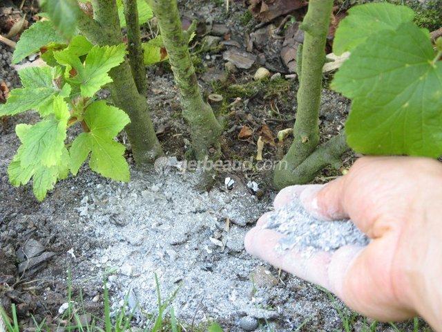 cendre-utilisation-jardin