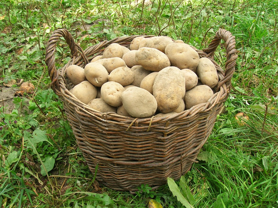 potatoes-501132_960_720