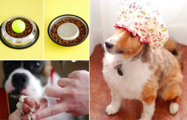 11 astuces que les propri taires de chien devraient conna tre astuces de grand m re - Linge deteint astuce grand mere ...