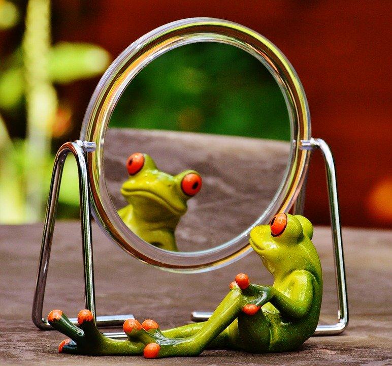 frog-1498909_960_720