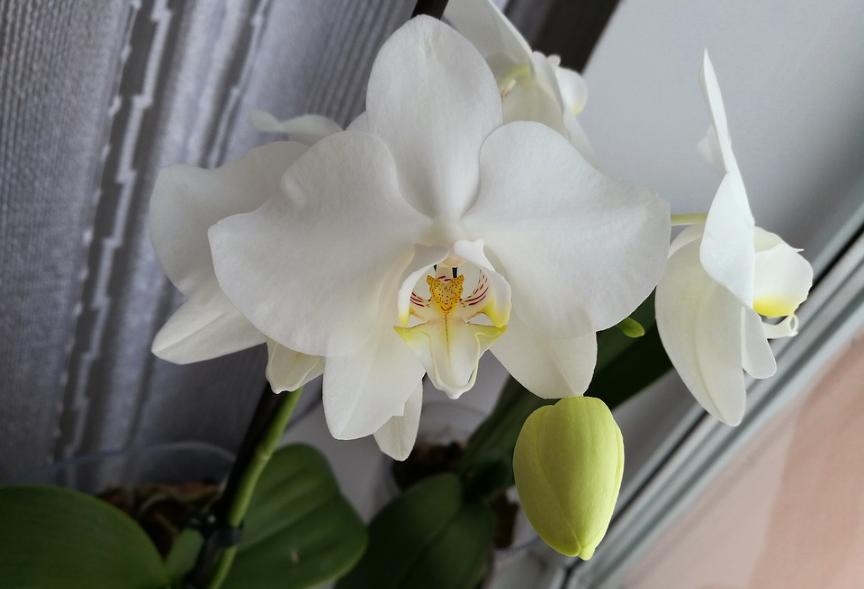 orchidées exposition