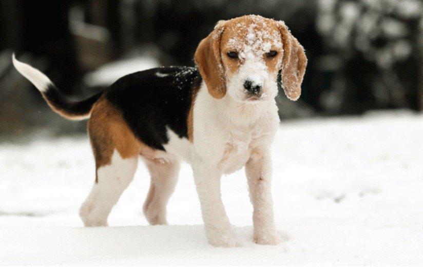 5 astuces pour pr parer votre chien l 39 hiver astuces de grand m re. Black Bedroom Furniture Sets. Home Design Ideas