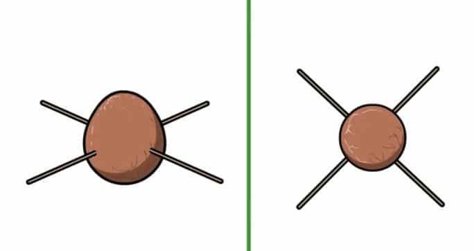 Comment faire pousser un avocat avec le noyau noyau - Planter un noyau de peche ...