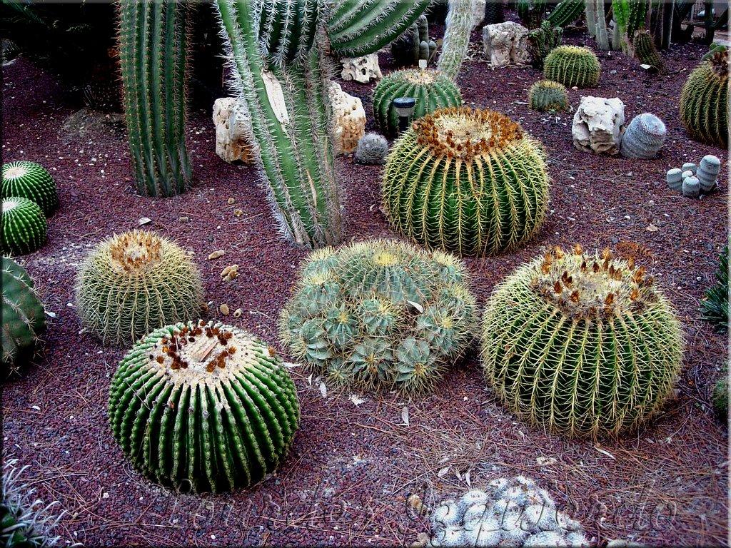 6 conseils pour bien entretenir un cactus astuces de grand m re - Entretenir un cactus ...