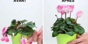 l 39 astuce pour sauver une plante en mauvais tat astuces de grand m re. Black Bedroom Furniture Sets. Home Design Ideas