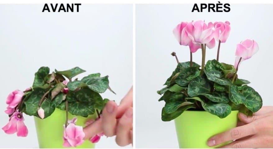 l 39 astuce pour sauver une plante en mauvais tat. Black Bedroom Furniture Sets. Home Design Ideas