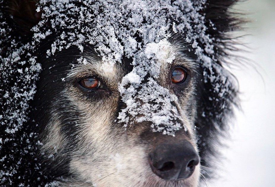 care of an older dog
