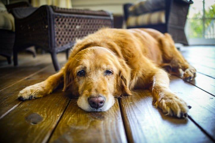 """Résultat de recherche d'images pour """"chien vieux"""""""