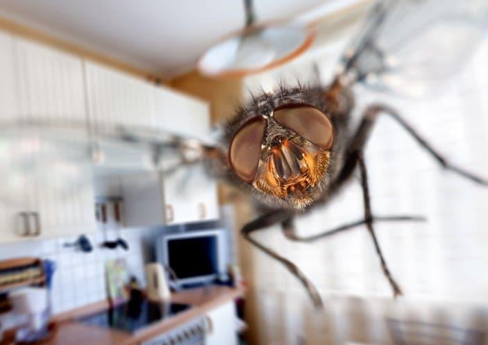 fabriquez ce spray aux huiles essentielles qui fait fuir les mouches. Black Bedroom Furniture Sets. Home Design Ideas