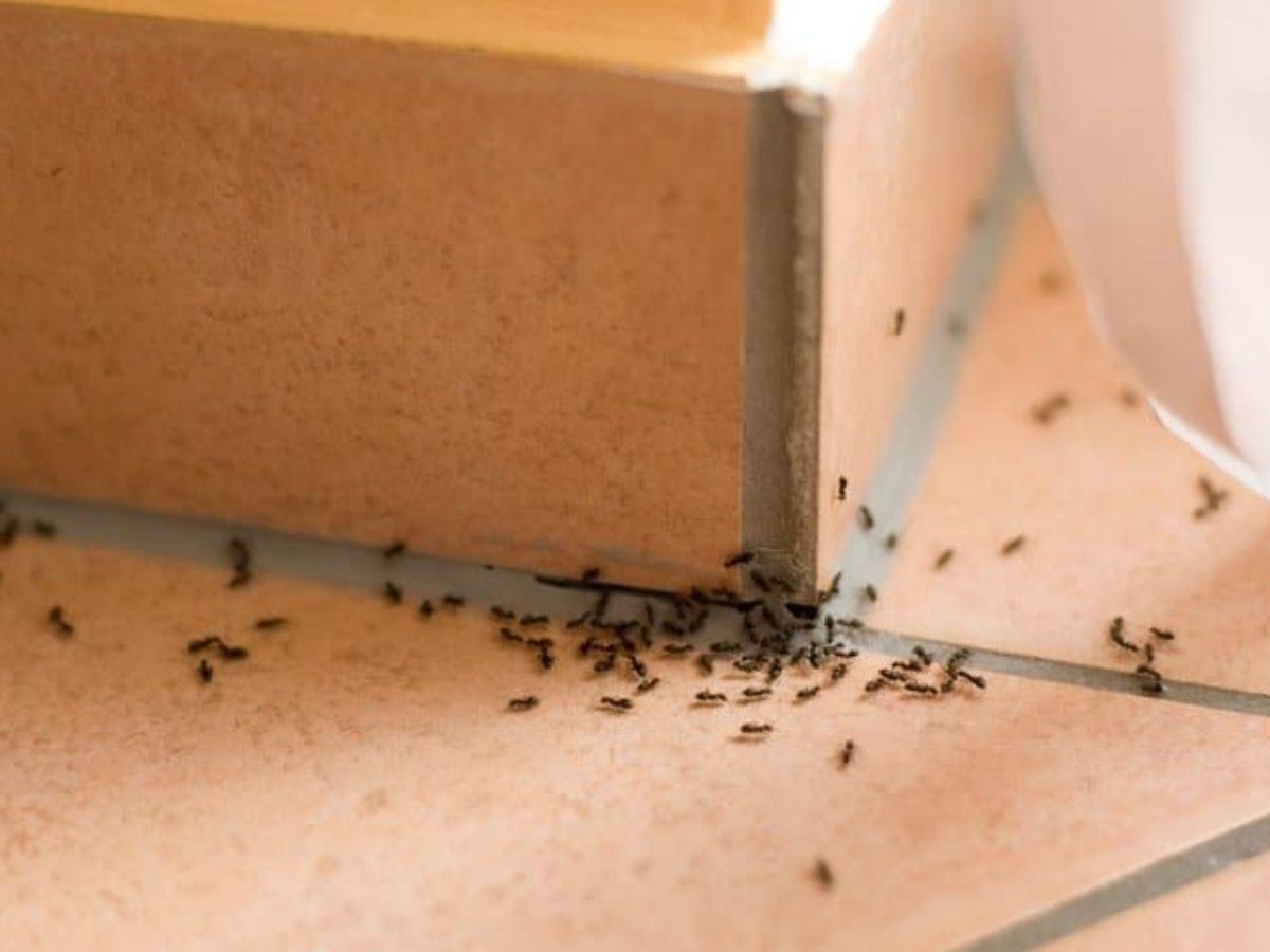 Faire Fuir Les Fourmis invasion de fourmis : 9 astuces naturelles pour s'en débarrasser