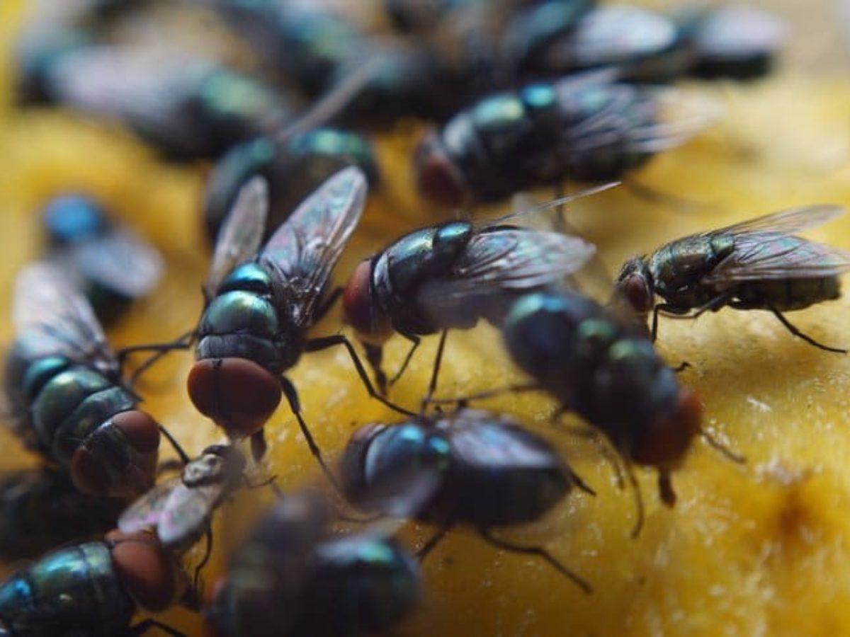 Remede De Grand Mere Contre Les Moucherons Dans La Maison une astuce contre les mouches pour un repas plus tranquille