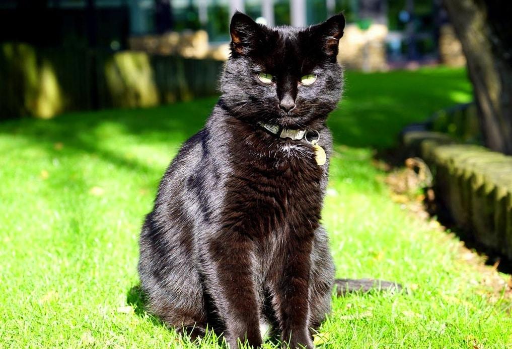 5 astuces pour prendre soin du pelage de votre chat for Prendre soin de son enfant interieur