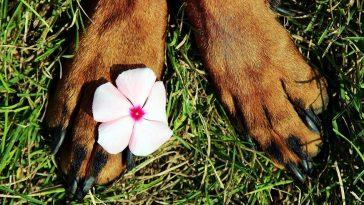 pattes chien