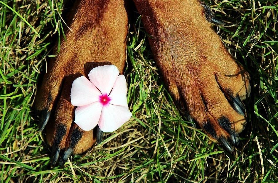 4 astuces naturelles pour soigner les pattes de votre chien