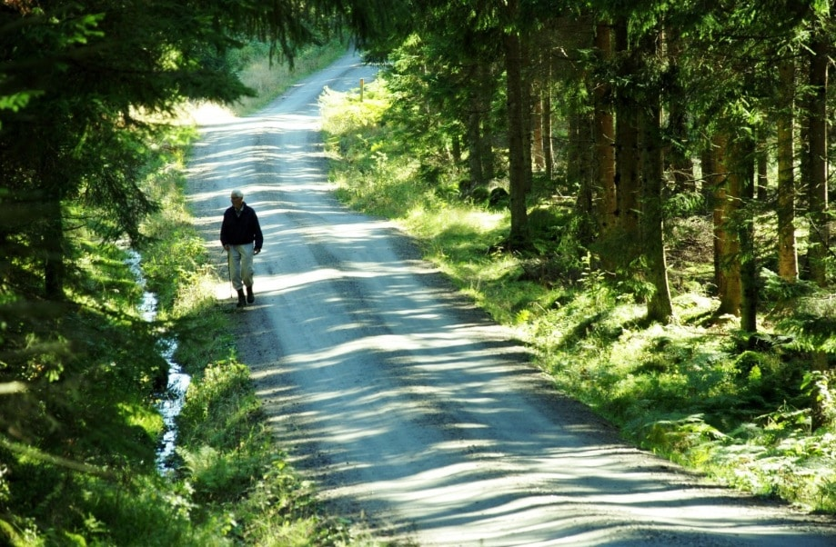 promenade forêt