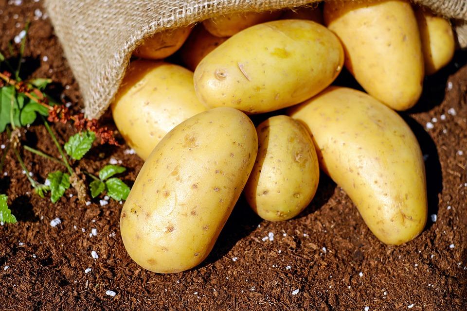 patates pommes de terre couleur