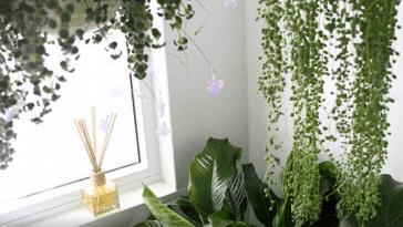 Comment nettoyer les parois de douche et vitres pleines de ...