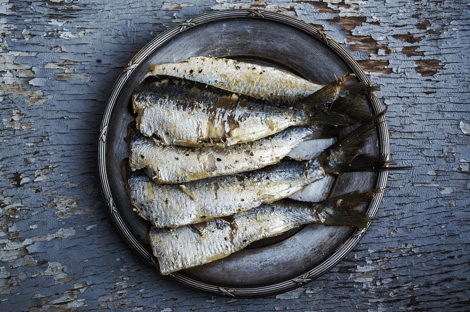 sardines poisson