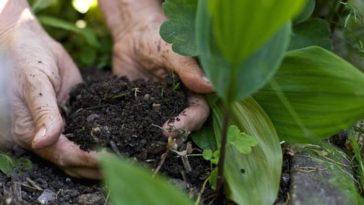 jardinage terre engrais fertiliser sol