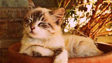 chat plantes vertes pot répulsif sommeil dormir sieste