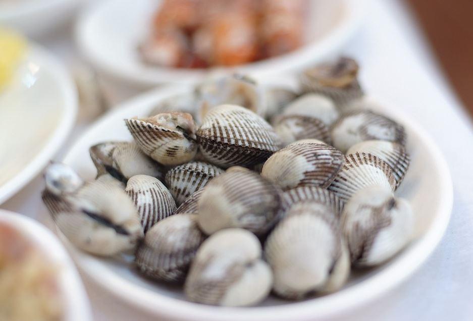 coques de mer fruits de mer coquillages