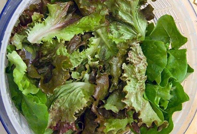 laitue salade