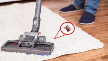 anti puces parquet plancher tapis sol