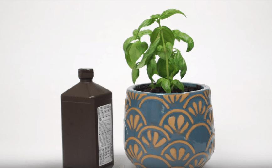 eau oxygénée plantes jardin