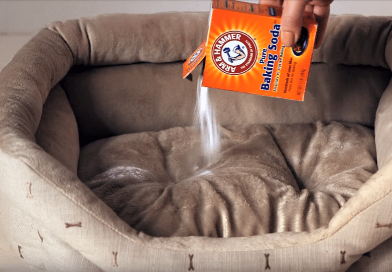 bicarbonate de soude mauvaises odeurs coussin animaux