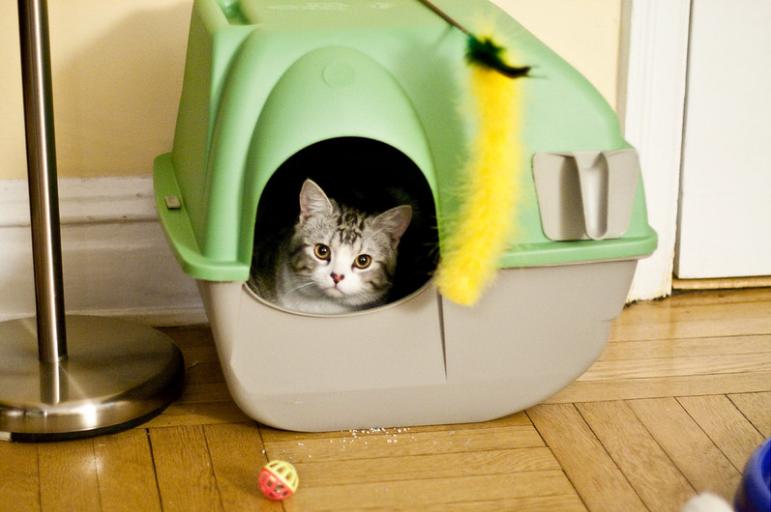 litière chat odeurs
