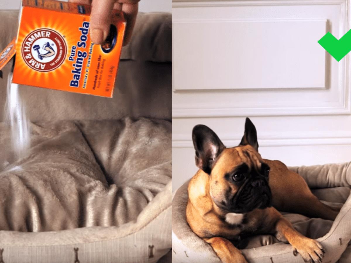 bicarbonate de soude panier chien ou chat