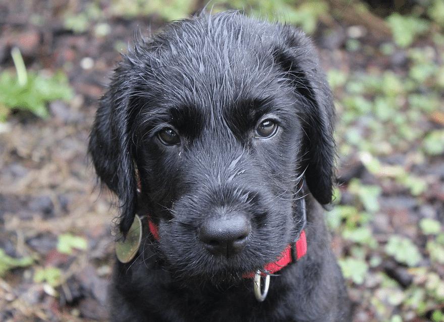 chien mouillé