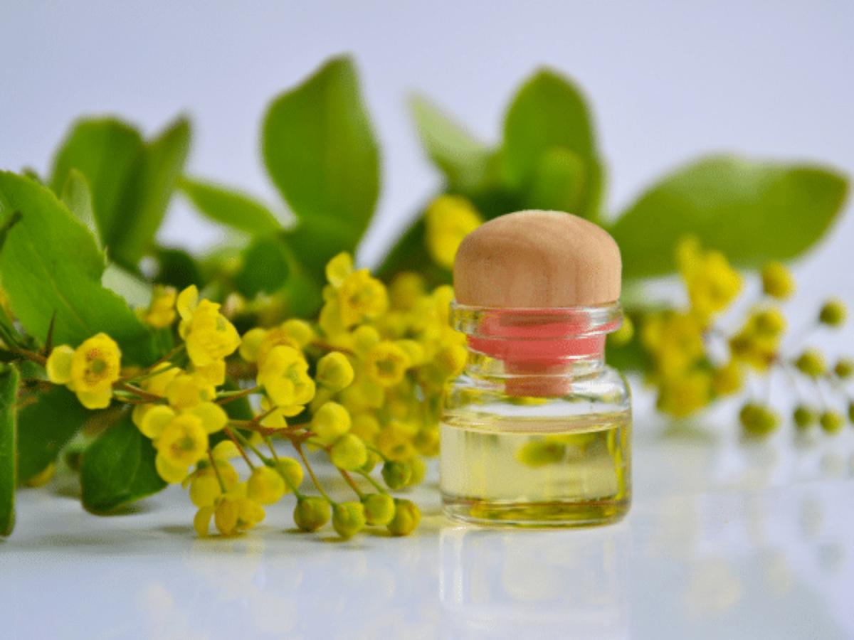 Huile Essentielle Efficace Contre Les Cafards huiles essentielles : les 7 meilleures utilisations à retenir pour le jardin