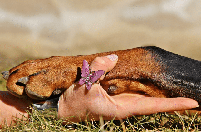 Une technique pour couper les griffes de son chien